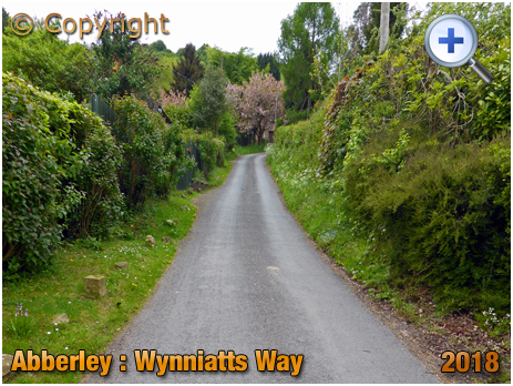 Abberley : Wynniatts Way Hill Climb [2018]