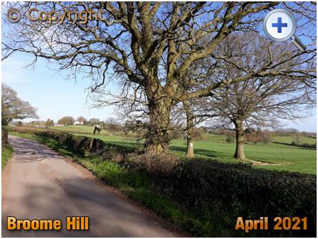 Broom Hill near Belbroughton [2021]