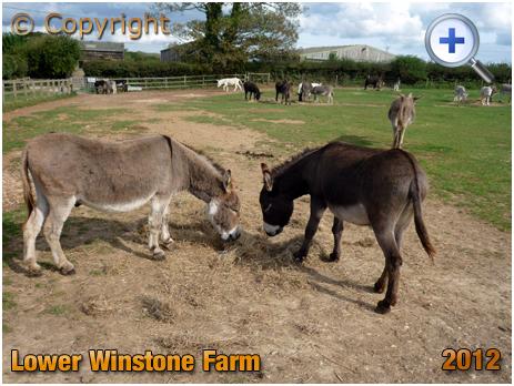 Isle of Wight : Donkey Sanctuary at Lower Winstone Farm [2012]