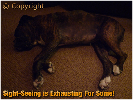 Rookley : Exhausted at the end of a Long Day [2012]