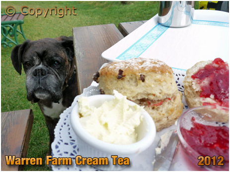 Alum Bay : Jam and Cream Scones at Warren Farm near The Needles [2012]