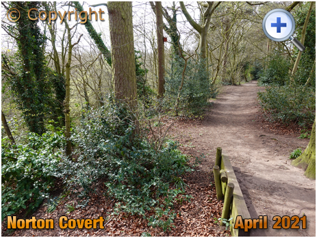 Stourbridge : Footpath through Norton Covert [2021]