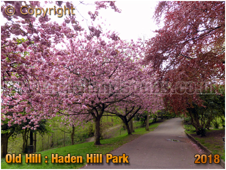 Spring Blossom at Haden Hill Park in Old Hill [2018]