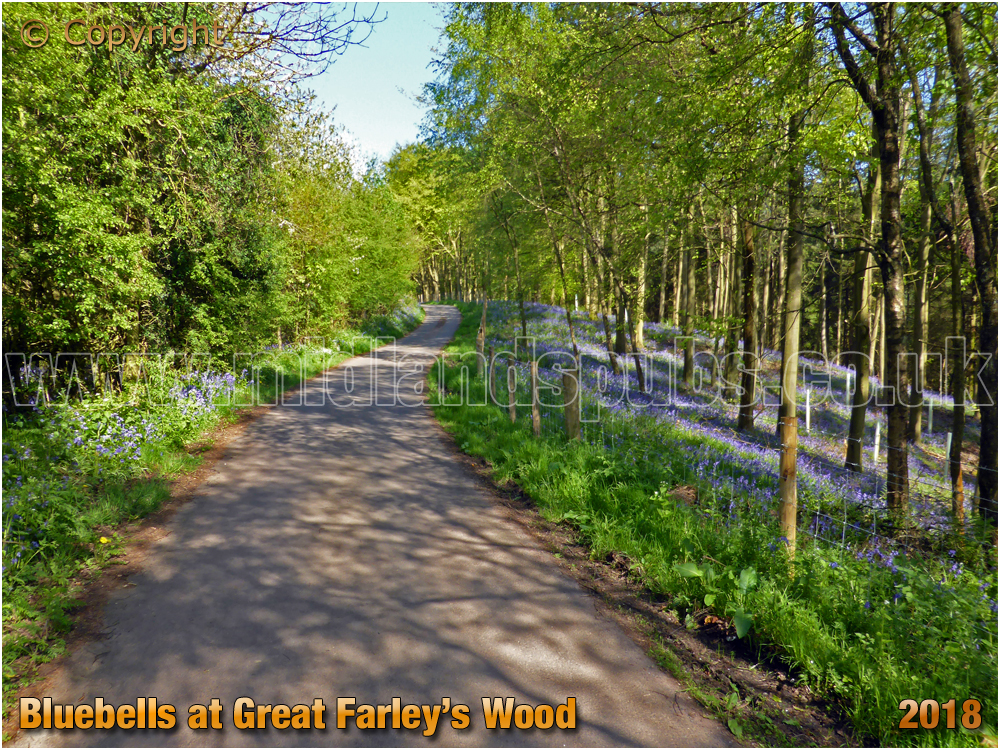 Bluebells All The Way Up Winwood Heath Road from Shut Mill to Romsley [2018]