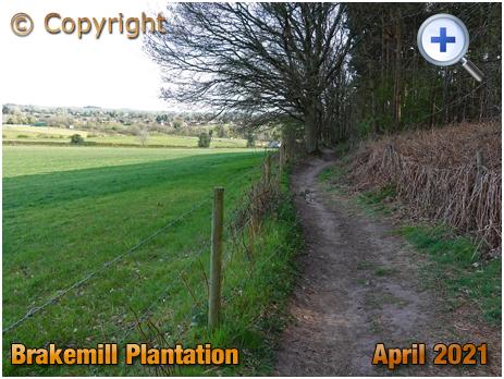 Stakenbridge : Brakemill Plantation [2021]