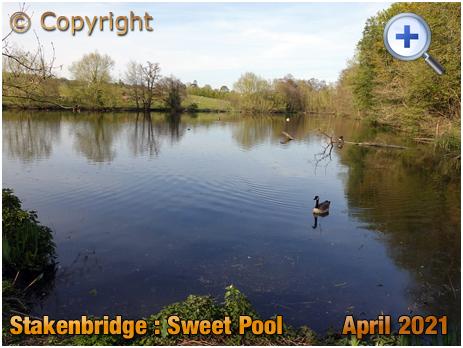 Stakenbridge : Sweet Pool [2021]