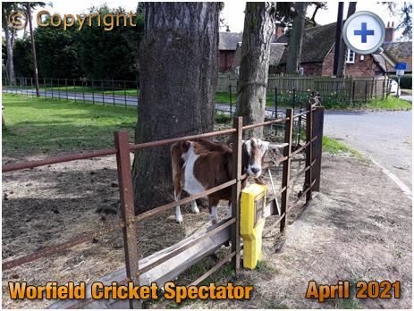 Worfield : Cricket Spectator [2021]