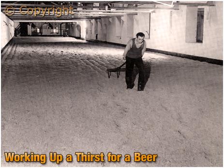Turning Malt Manually at Ansell's Brewery