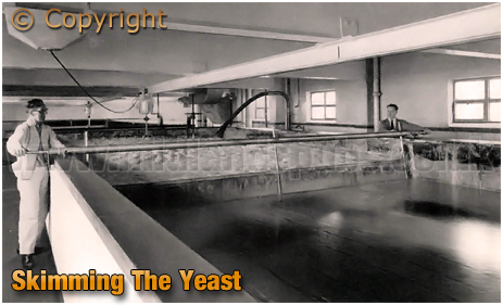Skimming The Yeast at Ansell's Brewery