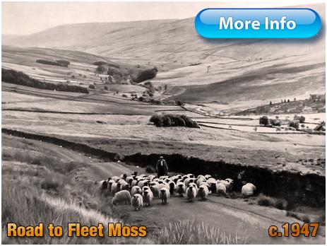 Yorkshire : Shepherd and Flock of Sheep on Fleet Moss [c.1947]
