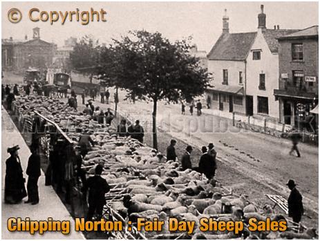 Chipping Norton : Fair Day Sheep Sales [c.1910[
