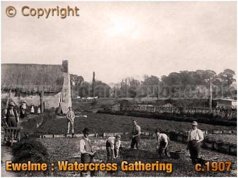 Ewelme : Watercress Gathering [c.1907]