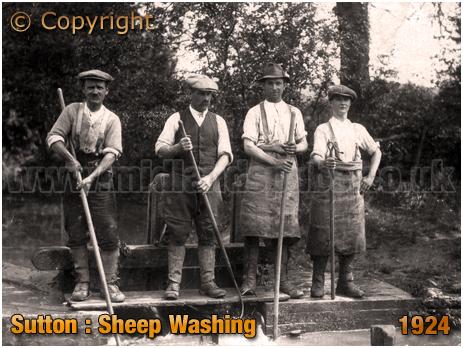Sutton : Sheep Washing [c.1924]