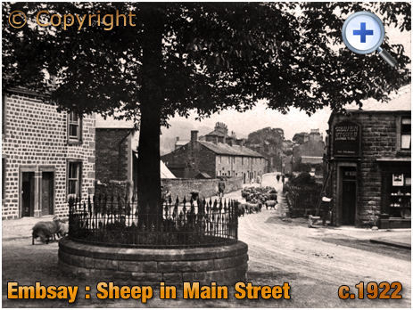 Yorkshire : Sheep in Main Street with the Craven Stores at Embsay [c.1922]