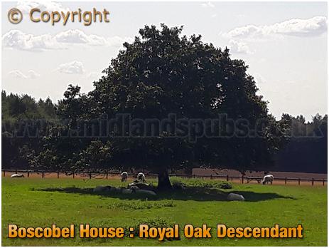 Boscobel House Royal Oak [2018]