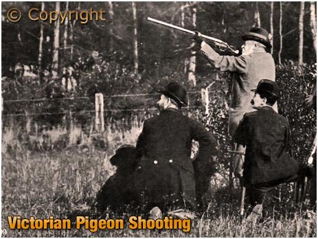 Victorian Pigeon-Shooting
