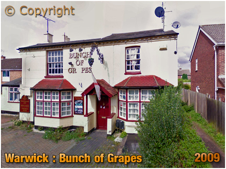 Warwick : Bunch of Grapes on Vine Lane [2009]